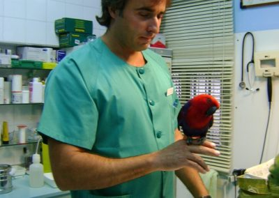 Clinica Veterinaria Animales Exoticos Madrid