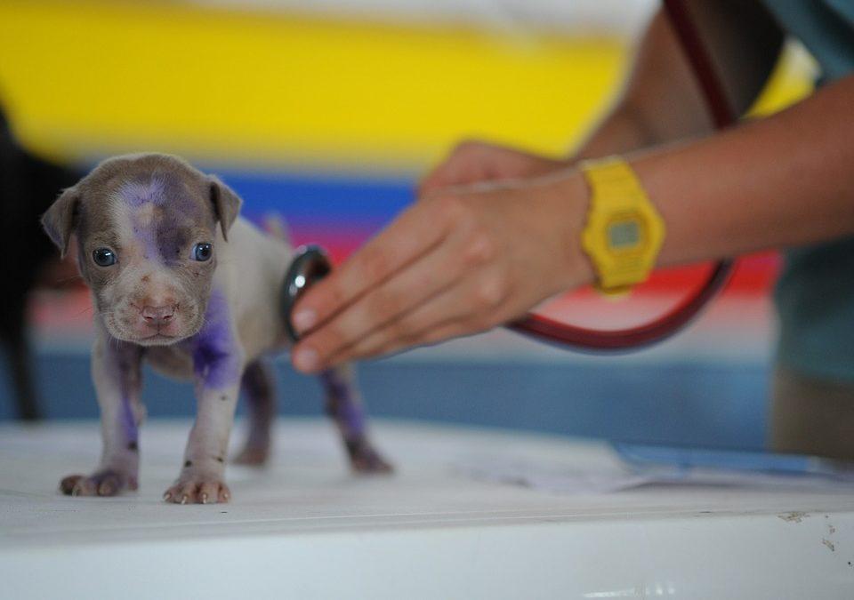 Vacunación de perros, ¿para qué sirve cada vacuna?